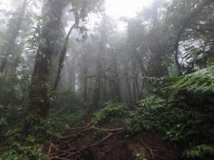 hiking trailrunning costarica cerrochato avenal volcano